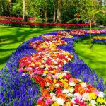 باغ گل کوکنهف